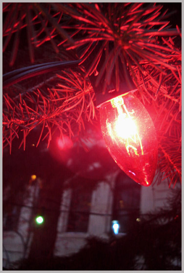 McDougal Center Lights.