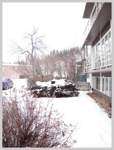 A snowy-frosty Friday